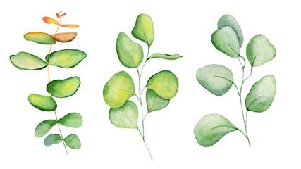 Watercolor eucaliptus leaves set Hand drawn illustration