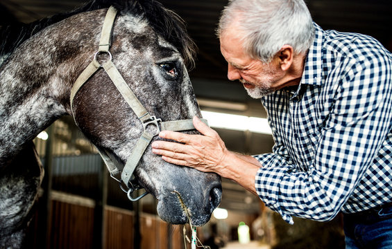 A senior man standing close to a horse in a stable, holding it.
