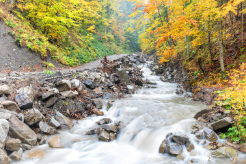 River in autumn forest with colorful trees and streaming water