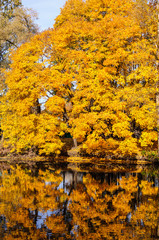 Autumn landscape of a river and yellow trees.