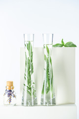vases and bottle of natural herbal essential oils with herbs and flowers on white surface