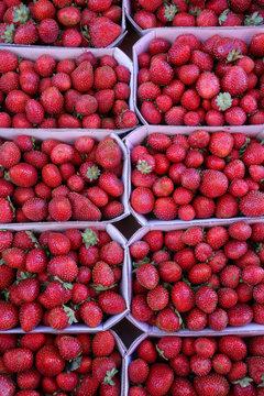 Fraises. Mara des bois. / Strawberries.