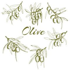 branch green olives, vector illustration hand-drawn logo of olives