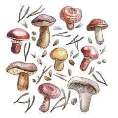 Watercolor mushrooms set, naturalistic illustration