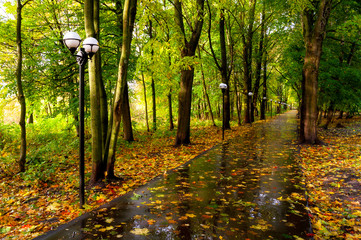 Autumn October landscape. Yellow autumn trees and fallen autumn leaves on the wet footpath in park alley after rain