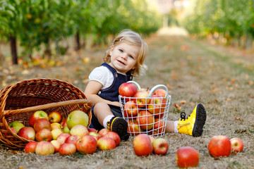 Portrait of little toddler girl with red apples in organic orchard. Adorable happy healthy baby child picking fresh ripe fruits from trees and having fun. Harvest season.