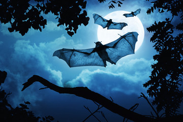 Fotoväggar - These creepy bats fly in on Halloween Night with a full moon behind them.