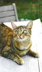adorable chat tigré sur la table de la terrasse