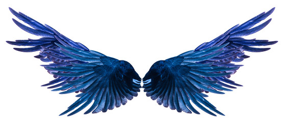 Blue Wing on a white background. Wall mural