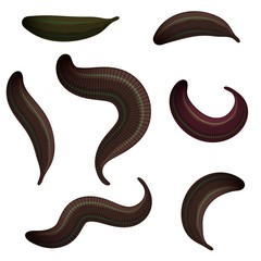 Set of leeches on a white background. The collection of medical leeches, isolated animals. Vector illustration of bloodsucking worms
