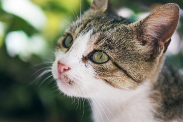 Beautiful Street Cat With Green Eyes And Pink Nose Closeup Portrait With Soft Focus