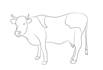 drawing of a cow line, vector