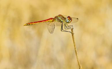 macro de un insecto