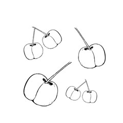 Cherry  drawing set. Isolated hand drawn berry on white background. Summer fruit engraved style illustration. Great for label, poster, print