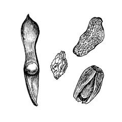 Bean, nut fruit, berry acorn  illustration on white