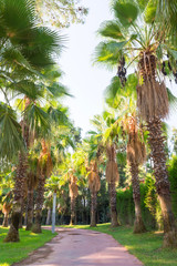 A path with palm trees planted along it. Summer vacation