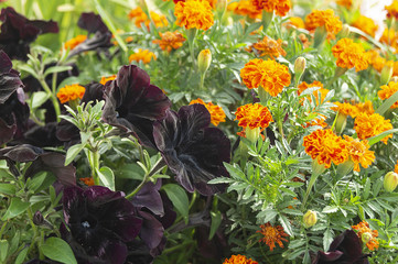 Bright flowerses on background of the green herb