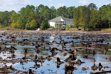 Old tree stumps that used to be at the bottom of Patricia Lake are revealed after it emptied when its dam collapsed in the aftermath of Hurricane Florence, in Boiling Spring Lakes, North Carolina