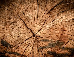 Fototapeta struktura ściętego drzewa obraz