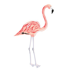 Tropical pink flamingo bird stand on two legs isolated on white background. Vector illustration. Paradise nature. Summer beach design. Drawn element