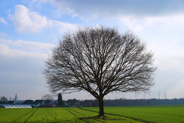 It is a tree on a cloudy day