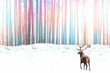 Wall Mural - Noble red deer against a winter fantasy colorful forest. Winter Christmas image.