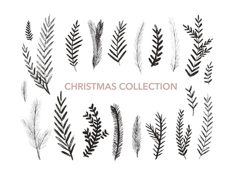 Collection of hand drawn fir branches. Botanical elements. Vector elements of plants.
