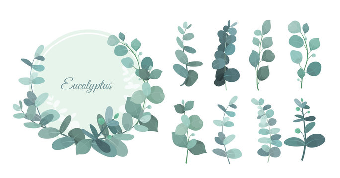 Vector illustration set of eucalyptus leafs and branches. Cute herbs for wedding greenery, decorative elements for invintations and greeting cards. Blue eucalyptus wreath, leaves and stems in flat