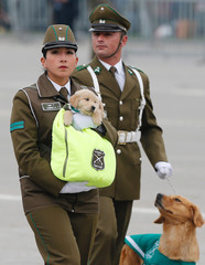 A Chilean police officer march with puppies of future police dogs during the annual military parade at the Bernardo O'Higgins park in, Santiago