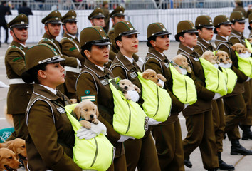 Chilean police officers march with puppies during the annual military parade in Santiago