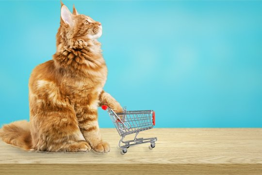 Cute red cat with shopping cart at shop