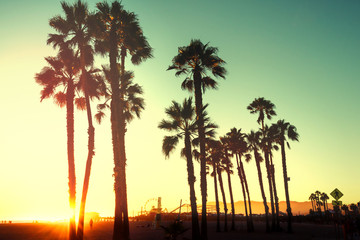 Beautiful sunset through the palm trees. Santa Monica beach, California, USA