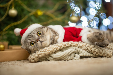 Tabby and the happy cat. Christmas season 2018, new year, holidays and holidays