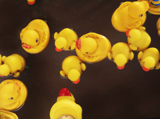 Yellow Rubber Ducks floating in water