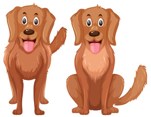 A set of golden retriever