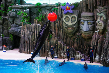 A dophin leaps for the ball during a show in Zhuhai