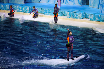 A trainer stands on a beluga during a show in Zhuhai