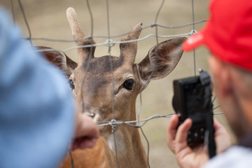 People photograph a deer at the zoo