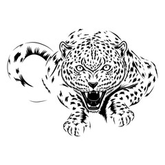 Vector image of a cheetah on a white background.