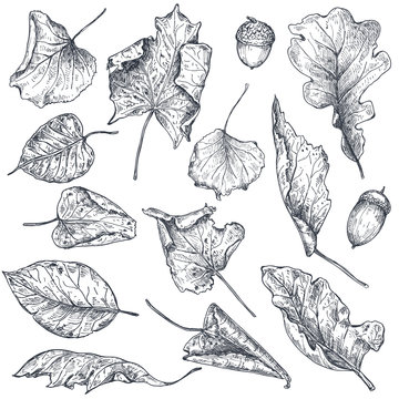 Vector collection of hand drawn dry autumn leaves