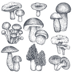Vector collection of hand drawn mushrooms in sketch style