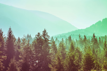 Papiers peints Forets panoramic image of mysterious green misty fog pine tree forest and mountains