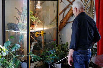 Philippe Gillet, 67 year-old Frenchman who lives with more than 400 reptiles and tamed alligators, looks at his King Cobra in his living room in Coueron near Nantes