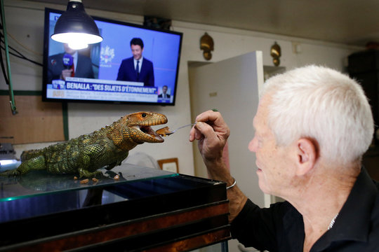 Philippe Gillet, 67 year-old Frenchman who lives with more than 400 reptiles and tamed alligators, feeds his Northern caiman lizard in his house in Coueron near Nantes