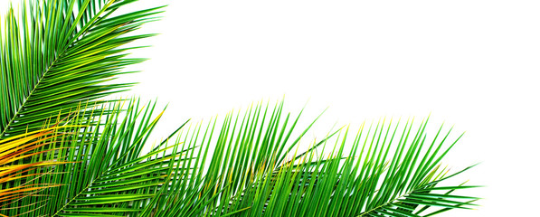 Tropical Palm Leaves Isolated White Flat Lay