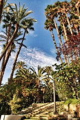 Beautiful and leafy municipal park in Elche between palm trees