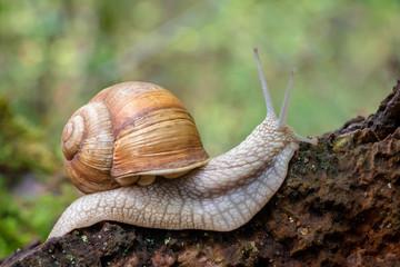 Close up shot of snail