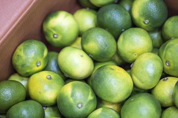 fresh green citrus fruit