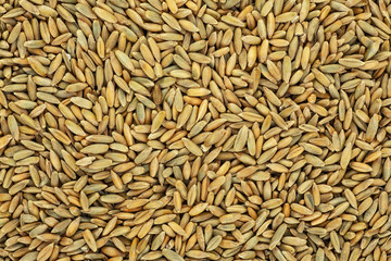 Close up of natural rye grains background Fotomurales