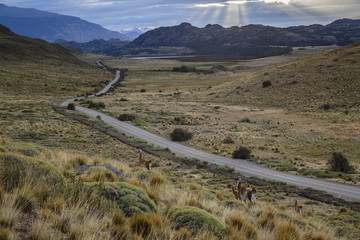 Guanacos in Chacabuco Valley at sunset,  Chile